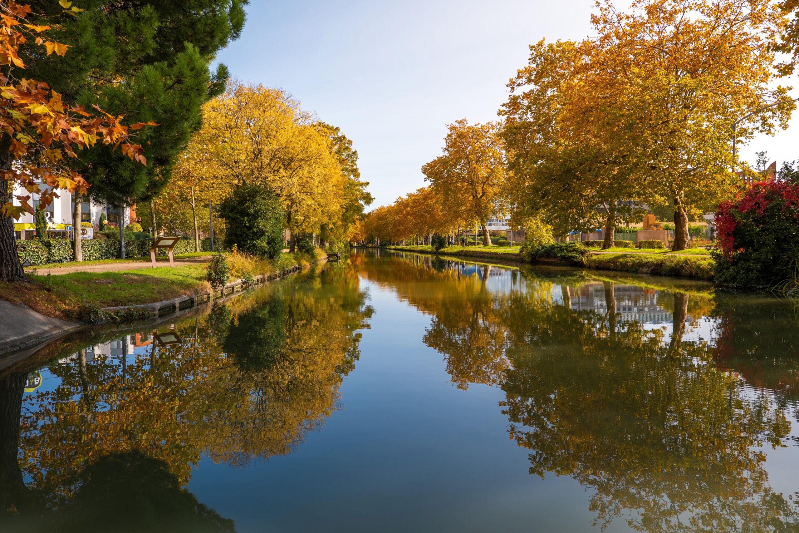 Épargne Occitanie : la replantation du canal du Midi sélectionnée par la région Occitanie